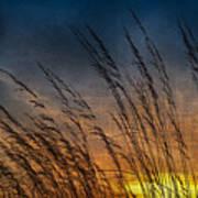 Prairie Grass Sunset Patterns Art Print