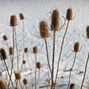 Prairie Seedheads Art Print