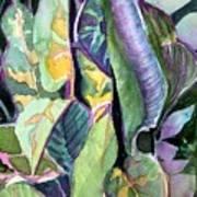 Pray Plant Art Print