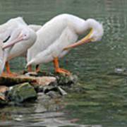 Prayer Of The Pelicans Art Print