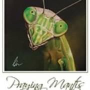 Praying Mantis Poster Art Print