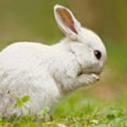 Praying White Rabbit Art Print