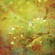 Pre Show Delicacy 8883 Idp_2 Art Print