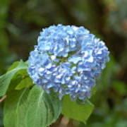 Pretty In Blue Art Print