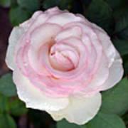 Pretty In Pink Rose Art Print