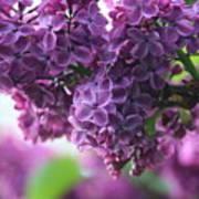 Pretty In Purple Art Print