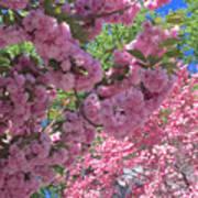 Pretty Pink Blossoms Art Print