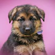 Pretty Puppy In Pink Art Print
