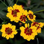 Pretty Yellow Flowers Art Print