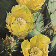 Prickle Pear Cactus Flower Trio Art Print