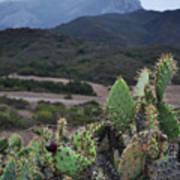 Prickly Pear Cacti Rancho Sierra Vista Satwiwa Mountains Art Print