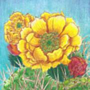 Prickly Pear Cactus Flowering Art Print