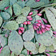 Prickly Pear Cactus Fruits Art Print