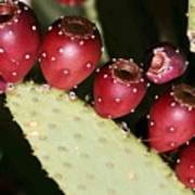 Prickly Pear-jerome Arizona Art Print