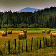 Priest Lake Hay Bales II Art Print