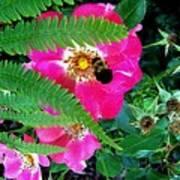 Primrose And Bee Art Print