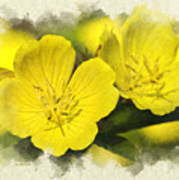 Primrose Flowers Blank Note Card Art Print