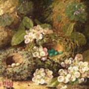 Primroses And Bird's Nests On A Mossy Bank Art Print