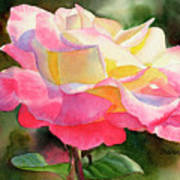 Princess Diana Rose Art Print