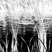 Private Duck Swimming Hole 1 In Black And White Art Print