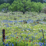 Private Property -wildflowers Of Texas. Art Print