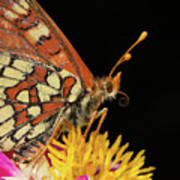 Profile Of A Butterfly Art Print