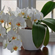 Profusion Of White Orchid Flowers Art Print