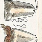 Prosthetic Noses, Ambroise Pare, 1561 Art Print