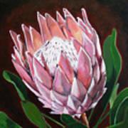 Protea Art Print