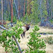 Protective Elk Art Print