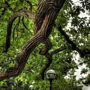 Protective Oak Art Print