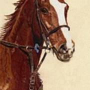 Proud - Portrait Of A Thoroughbred Horse Art Print