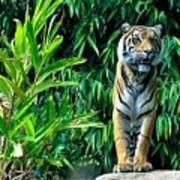Proud Tiger Art Print