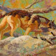 Prowler - Grey Wolf Art Print