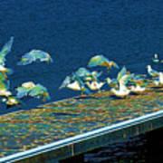 Psychedelic Gulls Art Print