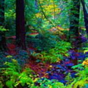 Psychedelicosmic Creek On Mt Tamalpais Art Print