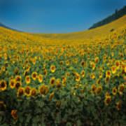 Psychodelic Sunflowers Art Print