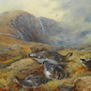 Ptarmigan Danger Aloft By Thorburn Art Print