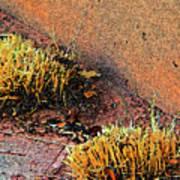 Pueblo Downtown Landscaping Art Print