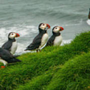 Puffins Returning From Fishing Art Print