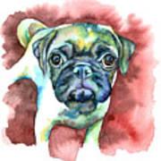 Pug In Red Art Print