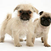 Pugzu And Pug Puppies Art Print