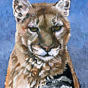 Puma - The Hunter Art Print