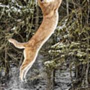 Puma High Jump Art Print