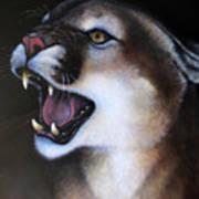 Puma II Art Print