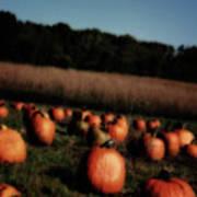Pumpkin Field Shadows Art Print
