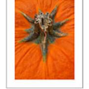 Pumpkin Stem Poster Art Print