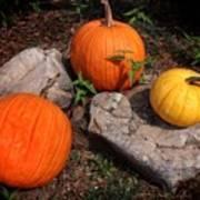 Pumpkins For October  Art Print