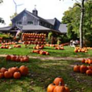 Pumpkins In Martha's Vineyard Farm Art Print