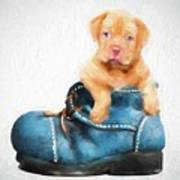 Pup In A Shoe Art Print